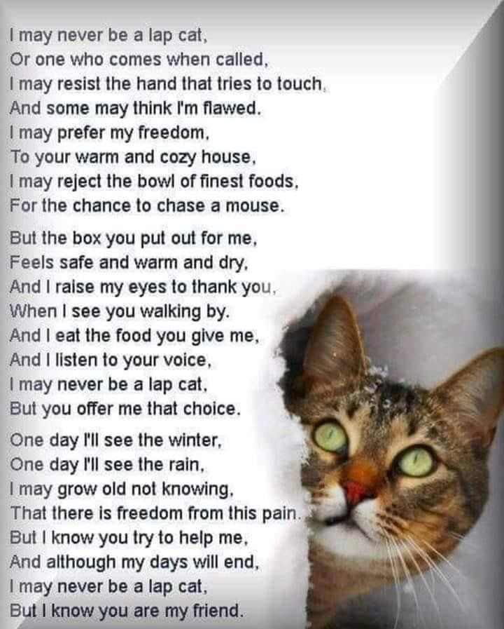 Pin by Julie Heitz on Inspirational Quotes Feral cats