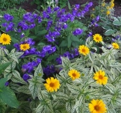 10 awesome easy care perennial plants perennials for Easy maintenance perennials