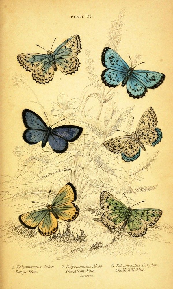 (PDF) The study of butterflies - ResearchGate