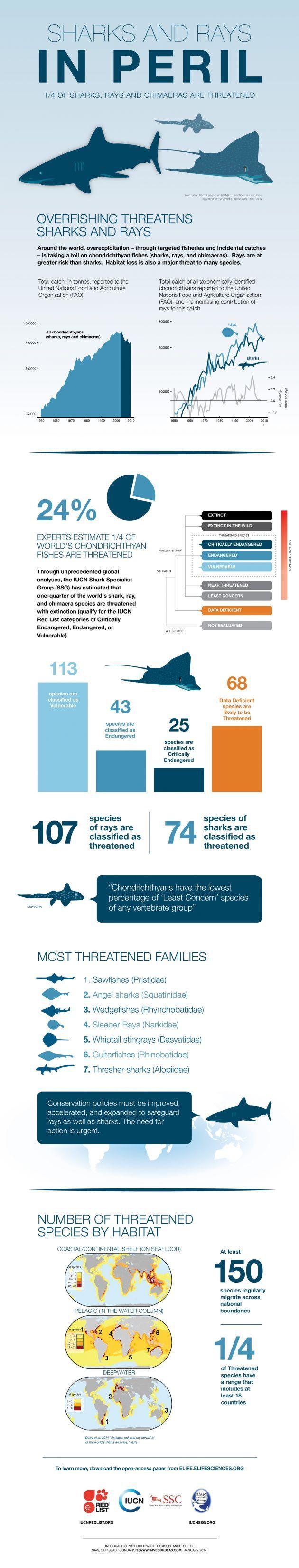 17 best Shark Week images on Pinterest | Sharks, Shark week and Animales