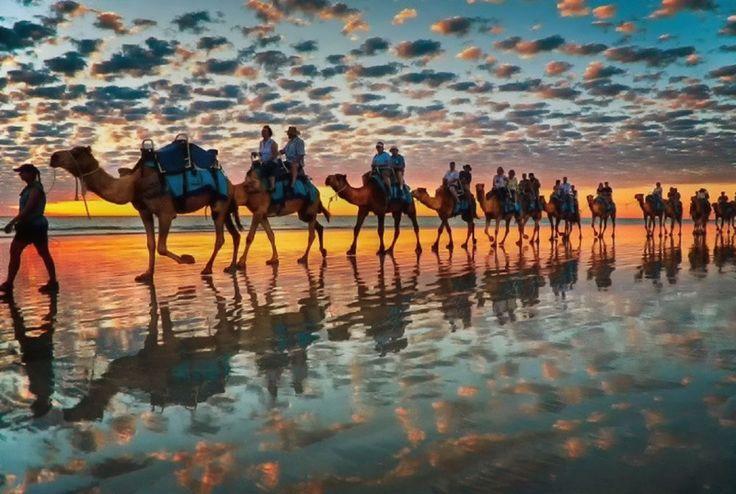 Обои для рабочего стола Караван верблюдов идет по морскому побережью, фотограф Brett & Donna Symons