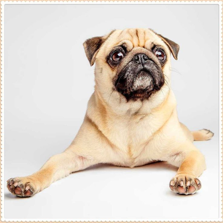They will be able to instruct you for the dog's temperament and to just what degree the dog has been socialized. If adopting a Dckmcetacw dog from shelter you may have to spend a number of days or weeks around the puppy trying to evaluate it.