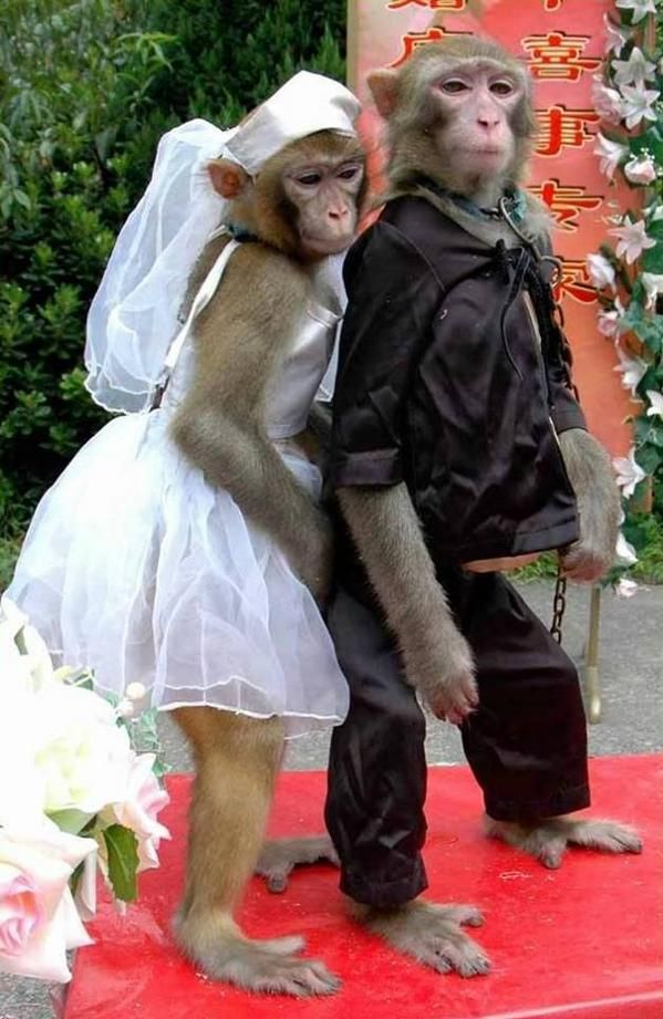 """Perfect Pictures su Twitter: """"Animals weddings.  http://t.co/9YXXinHchH"""""""
