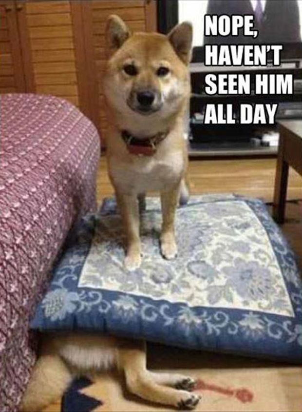 funny animal pictures with captions | 30 Funny animal captions - part 12 (30 pics), animal memes, animal ...