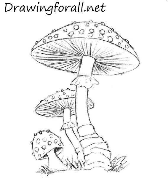 mushroom draw mushrooms drawing drawings pencil step drawingforall easy pages fungi coloring colored beginners pencile tutorials tegning today tutorial fairy
