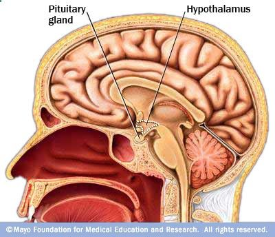 Sheehan syndrome = postpartum pituitary apoplexy due to enlarged pituitary during pregnancy in combo with severe blood loss. Can't lactate, no menstruation, lethargy, weakness and weight loss.