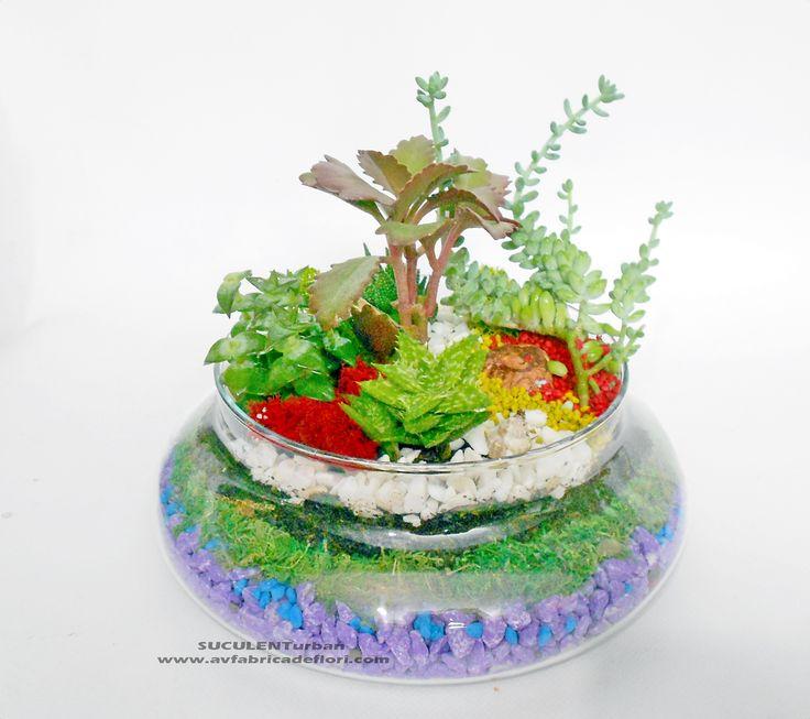 terariu cu plante suculente in vas de sticla rotund, muchi si piatra colorata