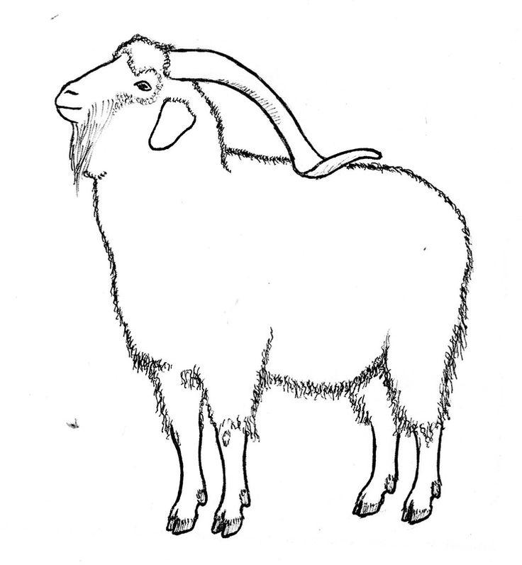 Mejores 20 imágenes de Angora Goats en Pinterest | Oveja, Cabras y ...