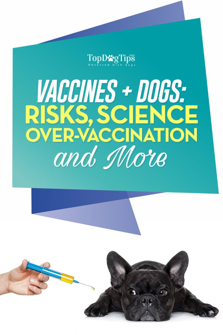 How to Prevent Over-Vaccination in Dogs