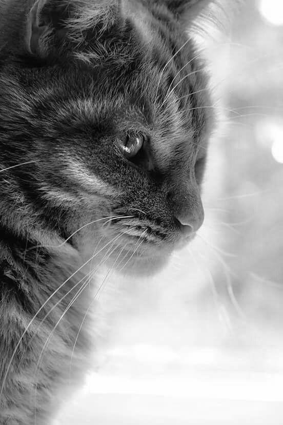 Amo la fotografía en Blanco y Negro...Amo los Gatos...no poseo derechos de autor sobre...                                                                                                                                                      Más
