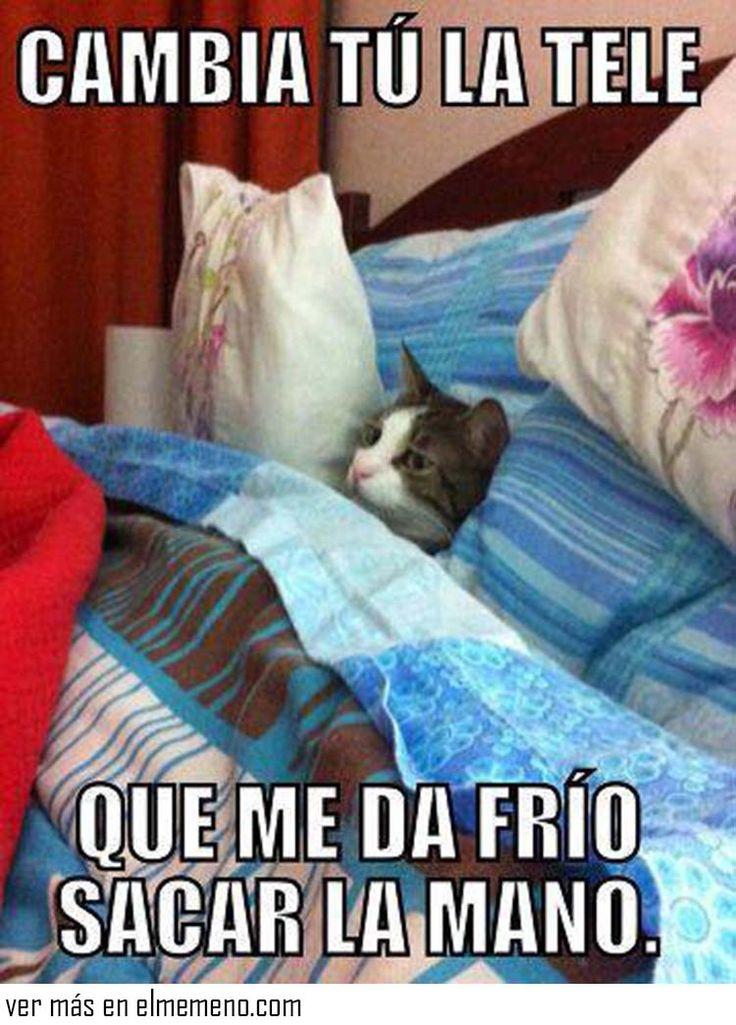 Con este frío nadie quiere salir de su cama @ www.elmemeno.com