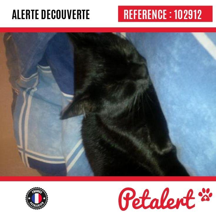 03.11.2016 / Chat / Floirac / Gironde / France