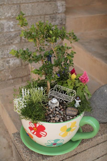 Teacup fairy garden (this is one of those giant teacups, not a regular teacup; you can tell from the plants)