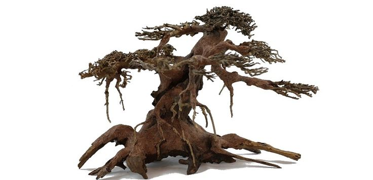 bonsai tree for sale, artificial bamboo trees bonsai tree care best indoor plants bonsai trees for sale bonsai tree for sale flowers and plants red maple tree ground cover plants dwarf fruit trees