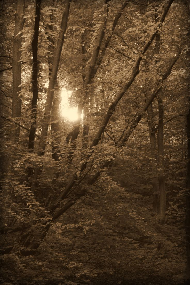 Power Forest by msitarus on Etsy