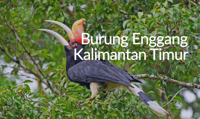 Lirik Lagu Burung Enggang - Kalimantan Timur