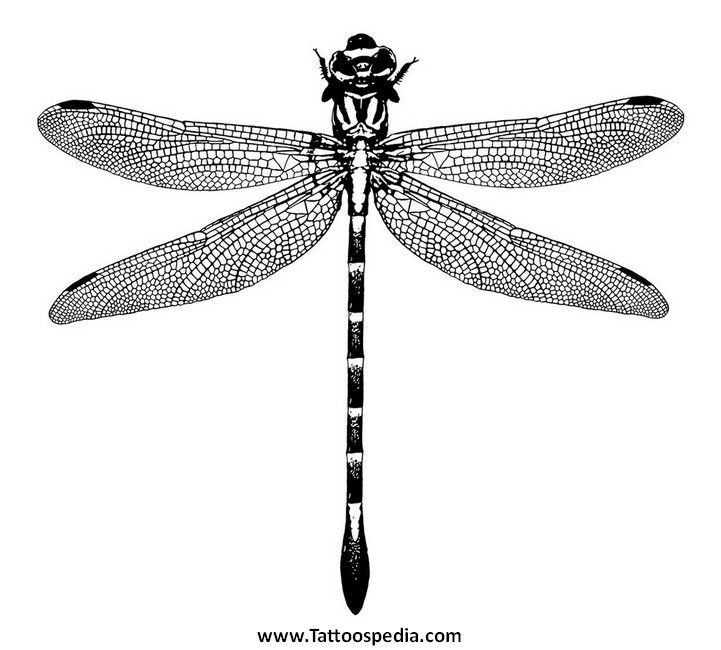 Dragonfly Tattoo Coheed 10