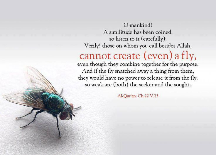 Qur'an al-Haj (The Pilgrimage) 22:73:  O people, an example is presented, so listen to it. Indeed, those you invoke besides Allah will never create [as much as] a fly, even if they gathered together for that purpose. And if the fly should steal away from them a [tiny] thing, they could not recover it from him. Weak are the pursuer and pursued.