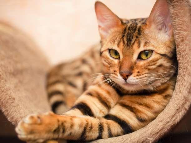 Νέα έρευνα αποδεικνύει ότι οι γάτες είναι ολιστικοί θεραπευτές!