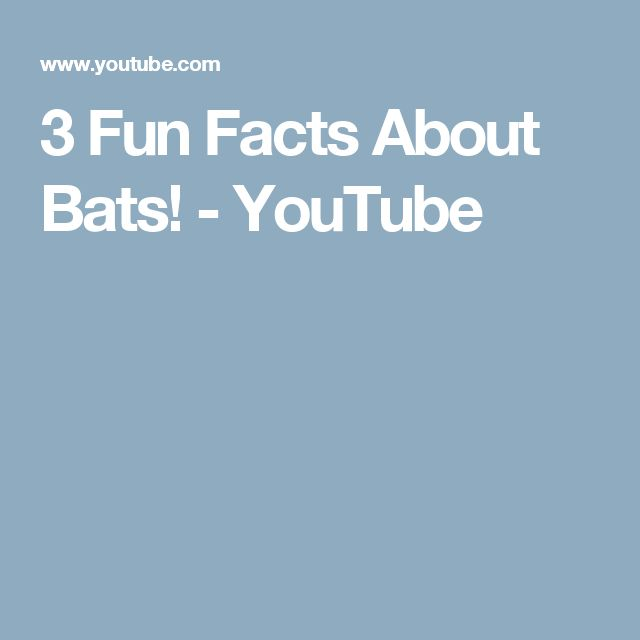 3 Fun Facts About Bats! - YouTube