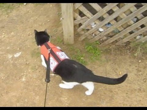 How to Find a Lost Cat | Cat Nutrition, Disease Prevention, and Behavior Modification