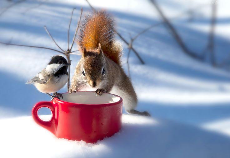 Zima, Wiewiórka, Sikorka