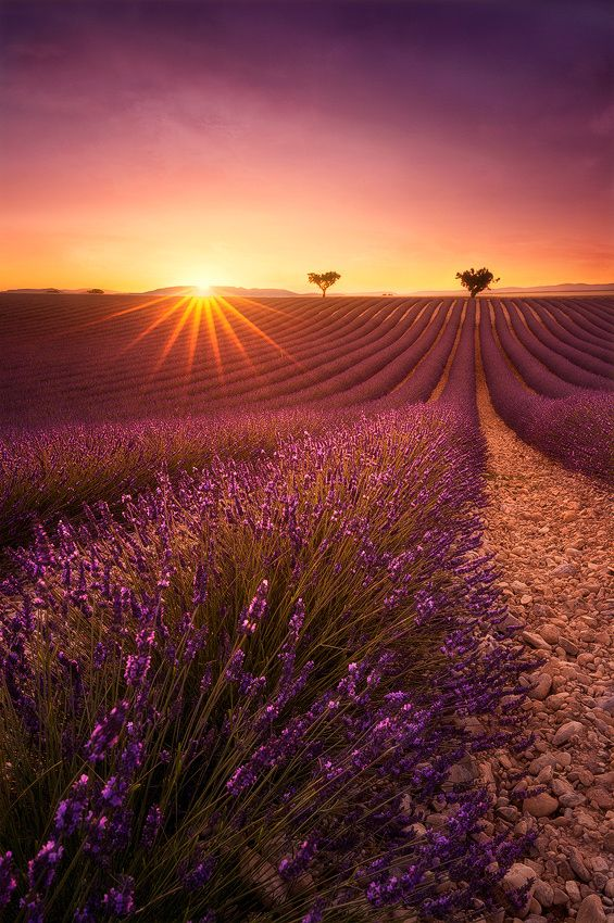 One day in Provence by Julien Delaval on 500px