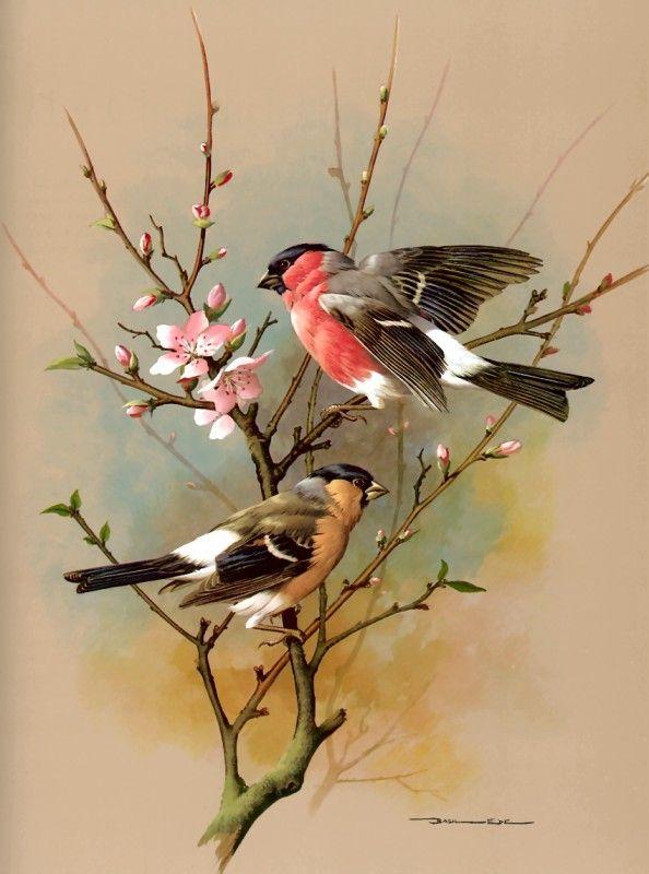 Bullfinch ~ Basil Ede