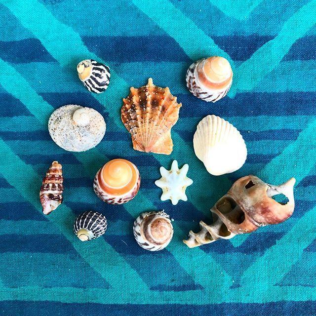 Nature's treasure = new shapes #beach #holidays #shells #designinspo #pattern #dspattern #southcoast #huskisson #dscollections