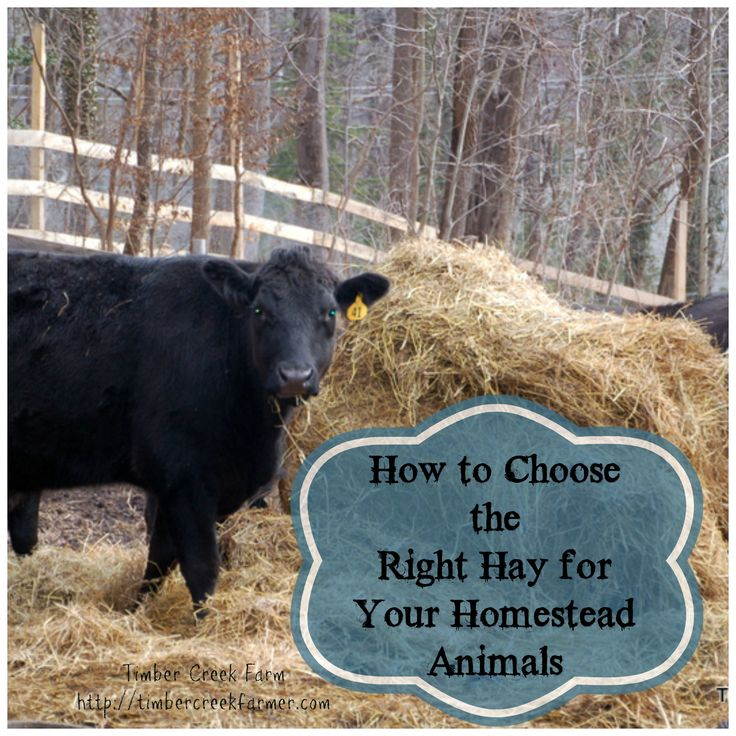 How to choose the right hay for your homestead animals - Timber Creek Farm