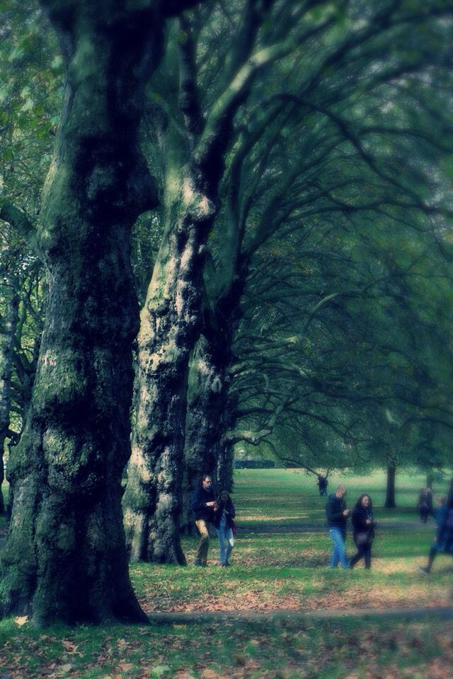Trees in London. The picture isn't that good but the trees are just unbelievably beautiful. Loved this park.