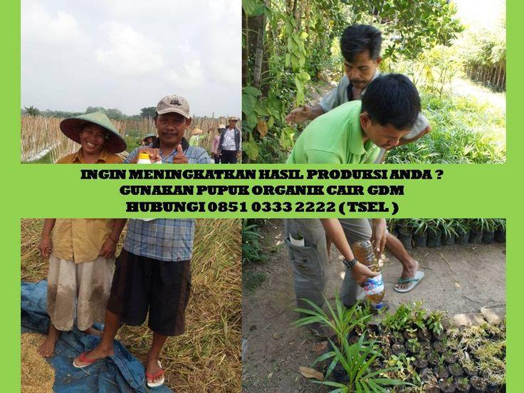 Informasi detil  HUBUNGI : 0851 0333 2222 www.peluangusahaagro.com