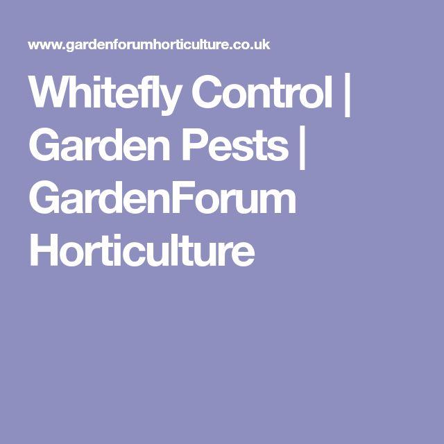 Whitefly Control | Garden Pests | GardenForum Horticulture