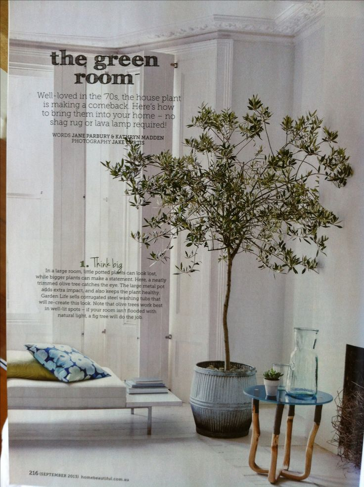 48 best images about in the garden on pinterest for Growing olive tree indoors
