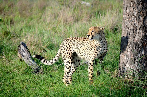 http://elpachinko.com/viajes-a-sudafrica/parque-kruger/  Un safari en el Parque Kruger de Sudáfrica es una experiencia muy emocionante, ver animales salvajes en su entorno me puso la piel de gallina