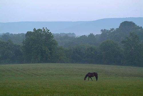 Middleburg, VA - Horse Country