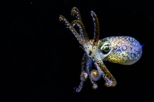octopus su tinta para detectar problemas bucales