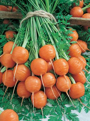 """Parisian Carrots (55 days)...A great little round carrot that is a nineteenth-century French heirloom.  It """"excels in clay or rocky soil where other carrots have problems developing properly"""".  They say it works great for containers."""