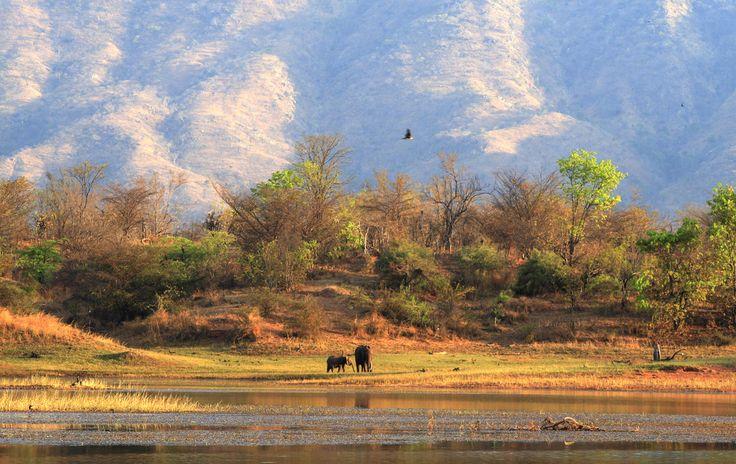 Matusadona National Park, Zimbabwe.  #zimbabwe #africansafari #africa #travel