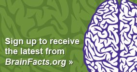 Sign up to receive the latest from BrainFacts.org