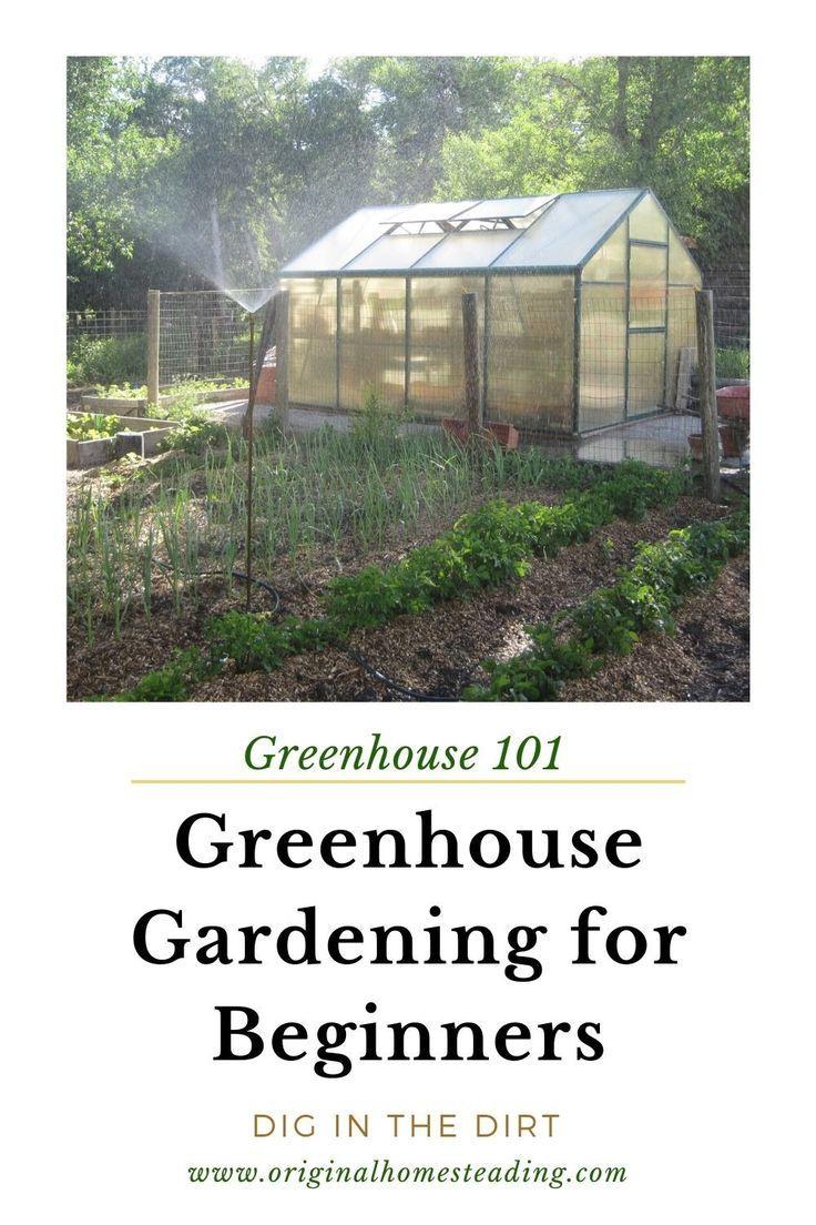 Greenhouse Gardening Easy Tips For Beginners Greenhouse Gardening Gardening For Beginners Growing Vegetables