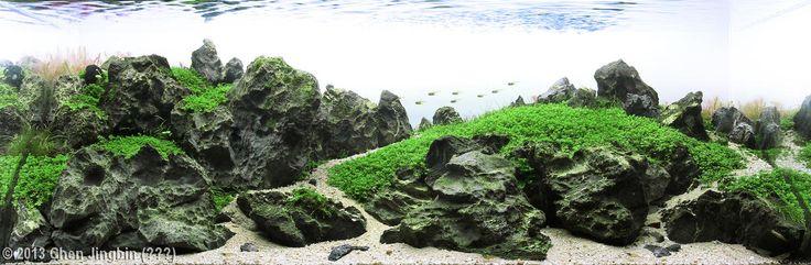 2013 AGA Aquascaping Contest - Entry #325