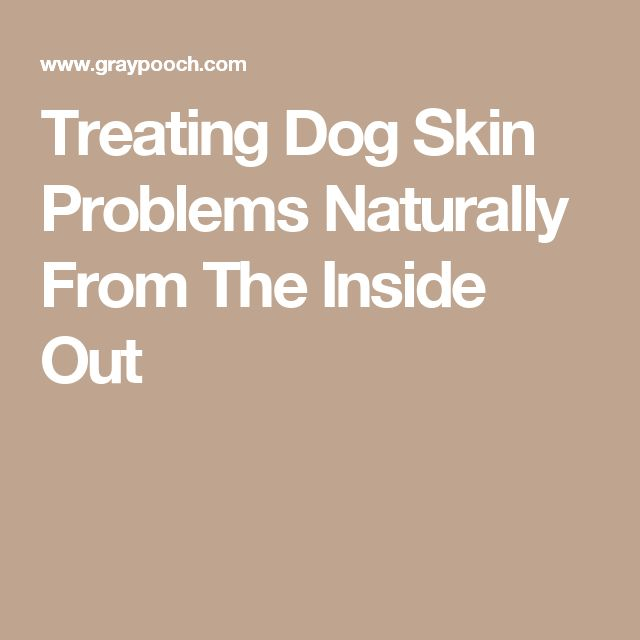 Treating Dog Skin Problems Naturally From The Inside Out