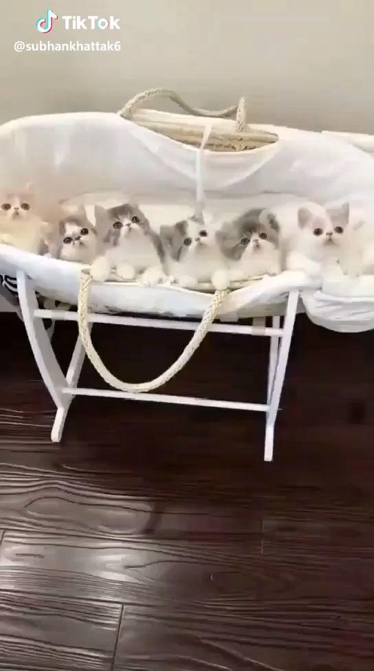 Amazing Cute Cats Dance…