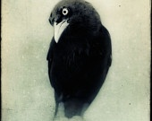 For some reason, I'm attracted to crows in artwork. What does that mean?
