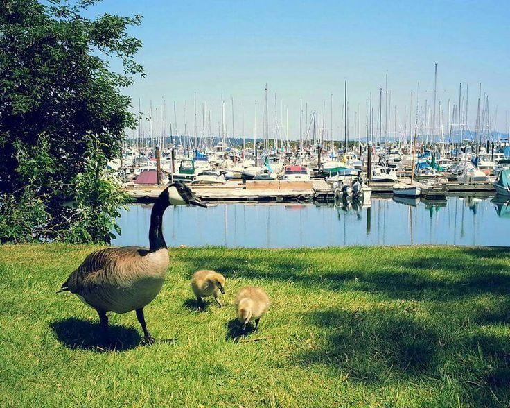 Oak Bay Marina. Oak Bay.