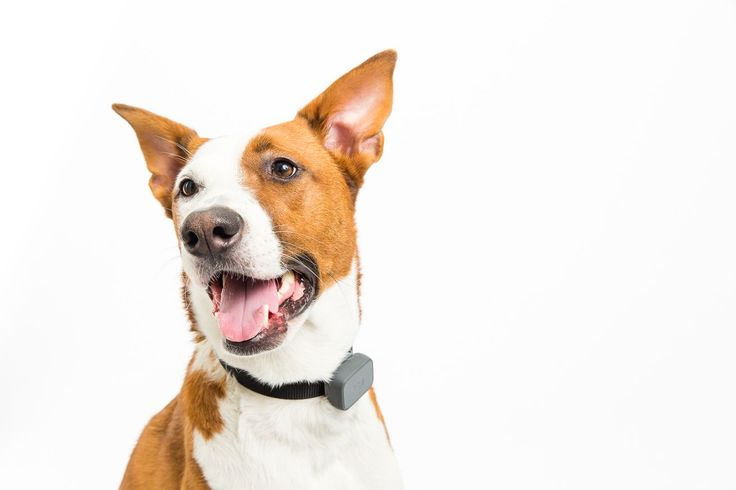 Whistle 3 is a smaller, smarter GPS tracker and fitness monitor for your pet    Whistle just announced its new Whistle 3 pet tracking collar at the 2017 Consumer Electronics Show in Las Vegas. The collar lets you monitor your pet's daily activity from any smartphone, or locate an   http://www.theverge.com/circuitbreaker/2017/1/4/14149086/whistle-3-gps-pet-tracker-price-date-ces-2017