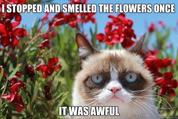 69 Best Images About Grumpy Cat On Pinterest