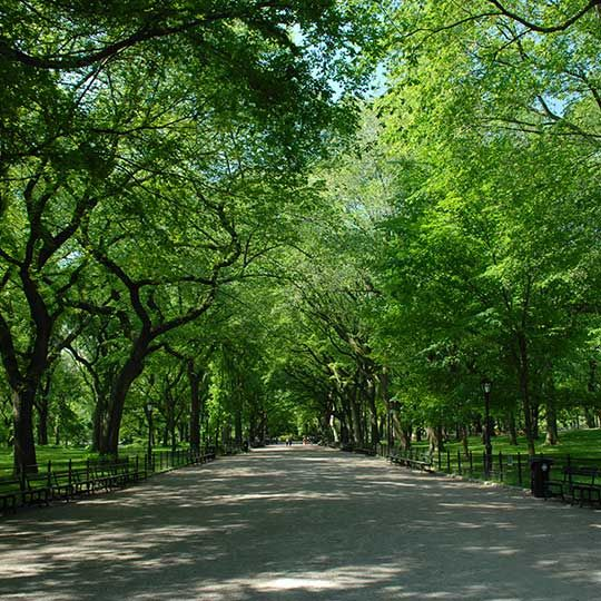 There is always something to do in Central Park — everything from fun family activities and free public programming, to hobbies and sports. Central Park Conservancy invites you to enjoy the Park with us!