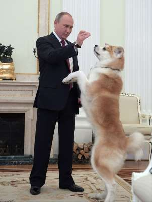 Сейчас у президента живет собака по кличке Юмэ японской породы акита-ину